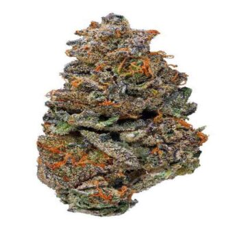 Buy Girl Scout Cookies Strain
