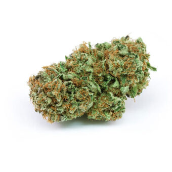 Buy Harlequin Weeds Strain Shop