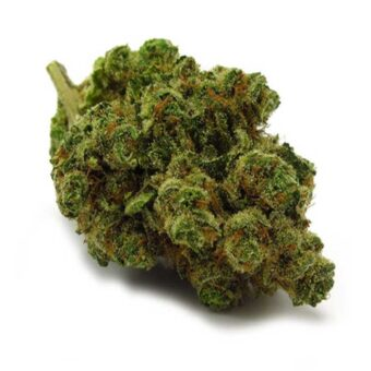 Chiquita Banana Strain Dispensary Shop