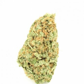 Cheese Strain Cannabis Store
